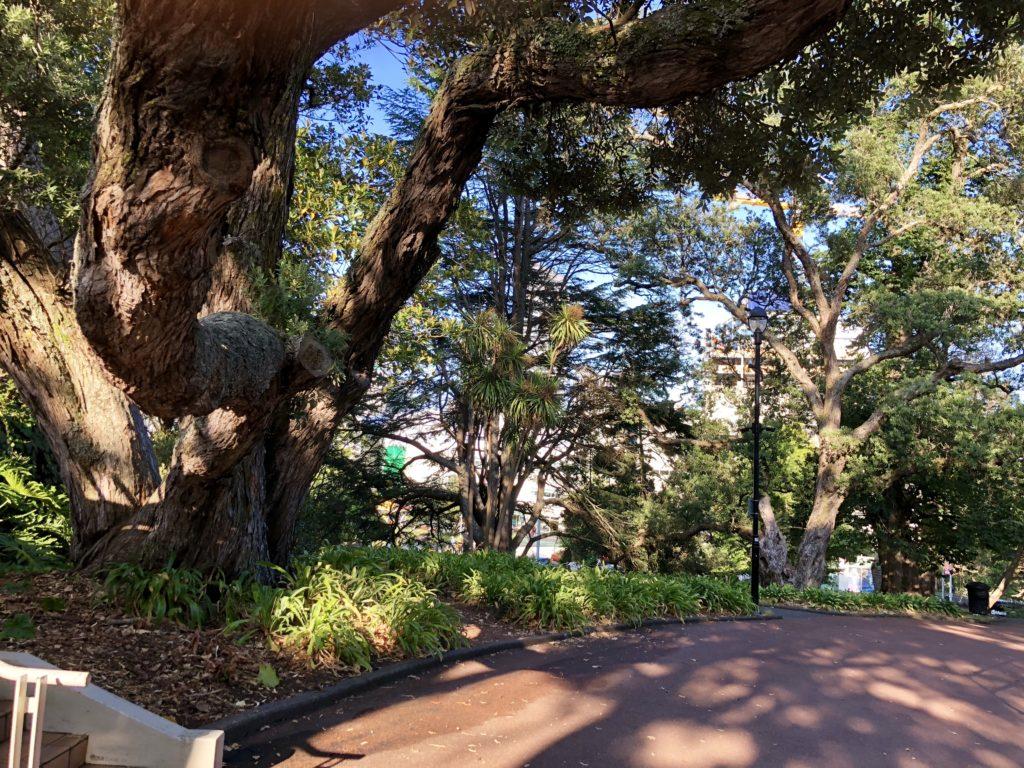 アルバート公園の木